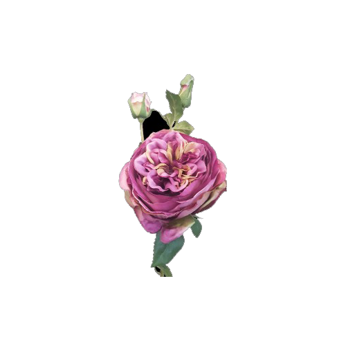 65cm David Austin Rose Spray Purple